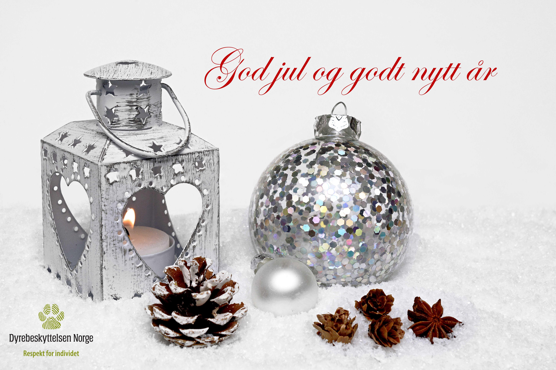 God jul og godt nytt år ifra Dyrebeskyttelsen Norge